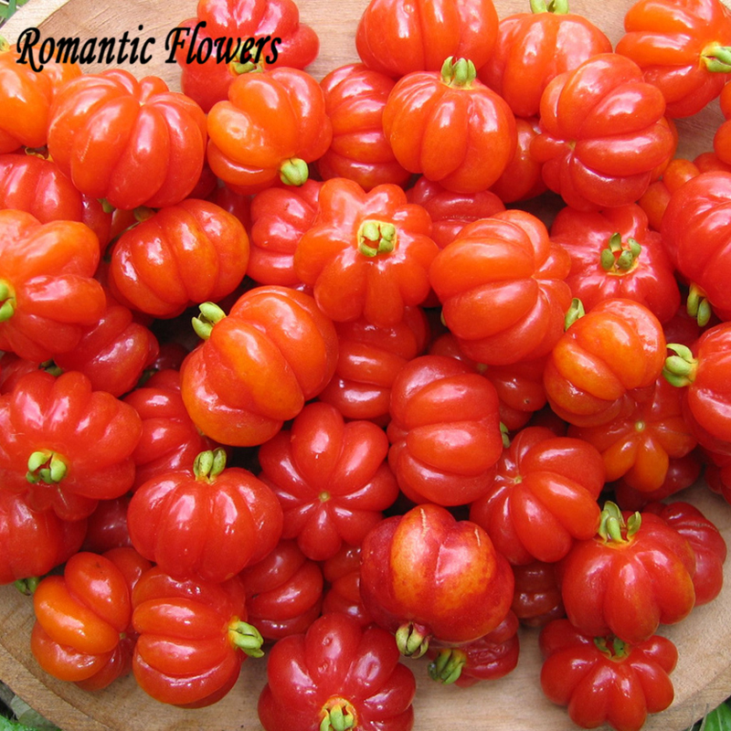 Online Buy Wholesale seeds tomato from China seeds tomato.