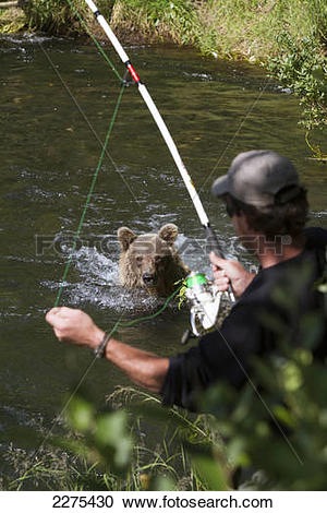Stock Photography of Sow Brown Bear Standing In The Russian River.