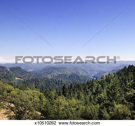 Stock Photo of USA, California, Sonoma, Russian River forest.