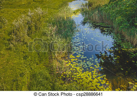 Stock Photo of Russian River swamp summer landscape green top view.