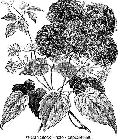Vector Clipart of Devil's Darning Needles or Devil's Hair or Love.