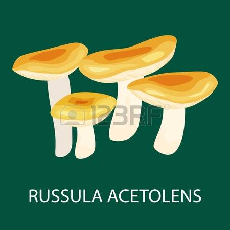 206 Russula Cliparts, Stock Vector And Royalty Free Russula.