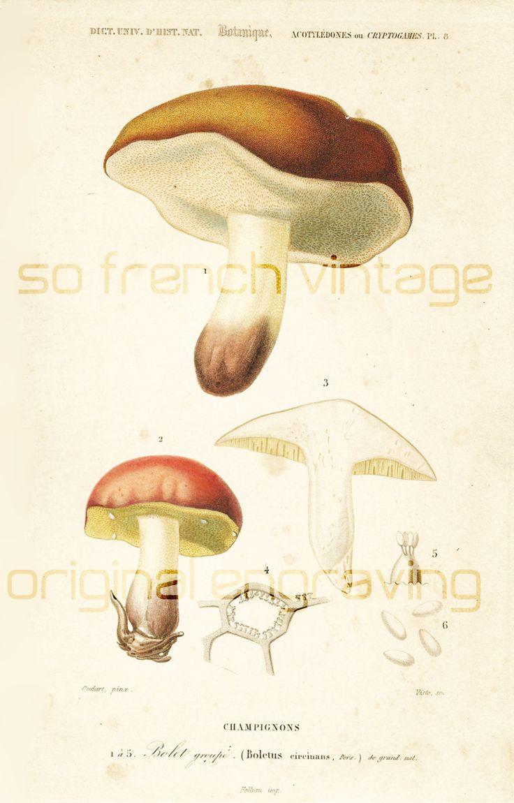 1000+ ideas about Champignon Bolet on Pinterest.