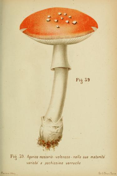 Trattatello popolare sui funghi /.