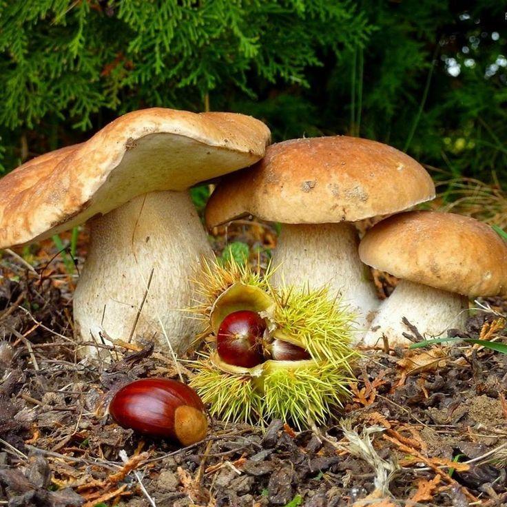 1000+ images about paddestoelen/ mushrooms on Pinterest.