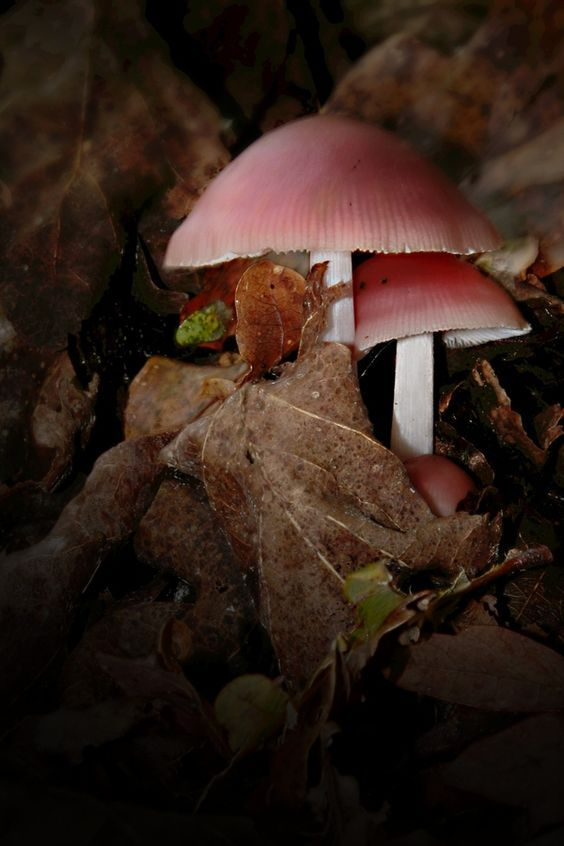 17 Best images about Mushrooms on Pinterest.