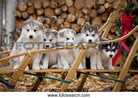 Rustic Nature Outdoors Dogsled Clipart.