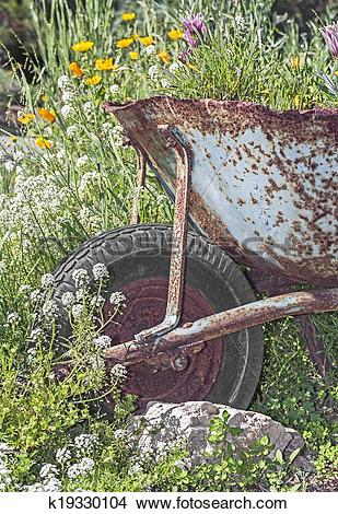 Stock Photo of Rusty metal wheelbarrow as a flower bed planter in.