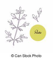 Rutaceae Clipart Vector and Illustration. 19 Rutaceae clip art.