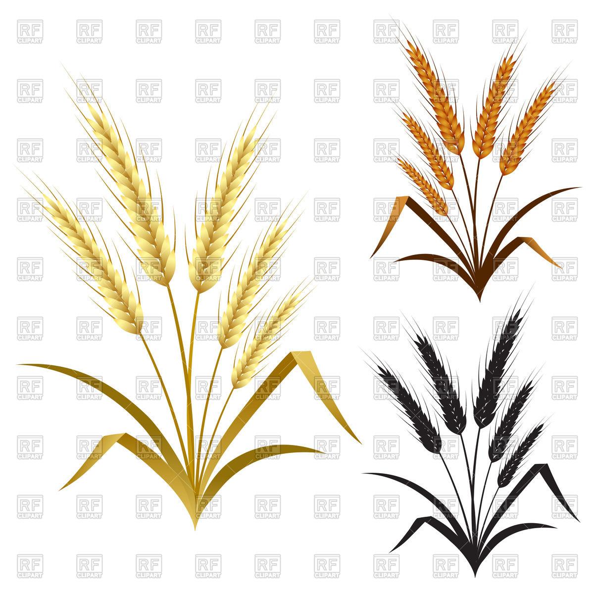 Ears of Wheat, barley and rye Vector Image #49710.