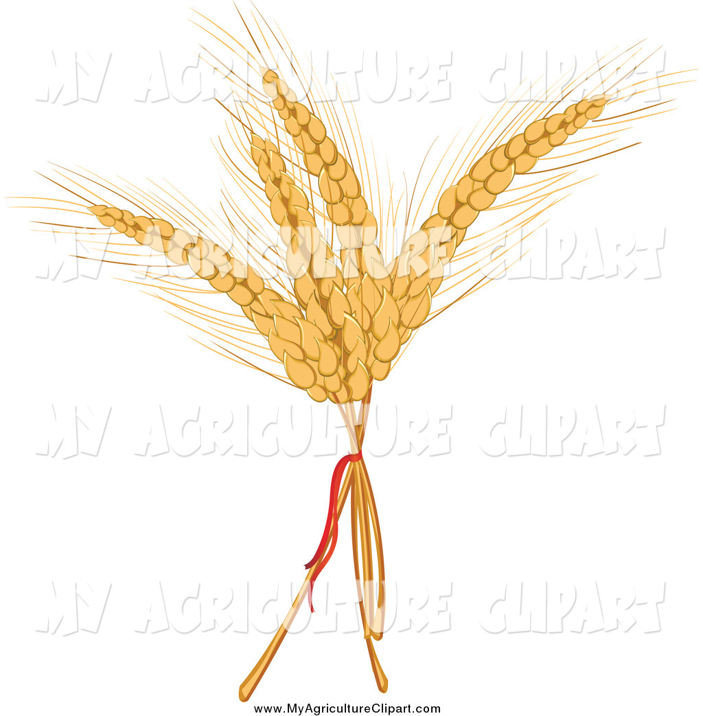 Royalty Free Rye Stock Agriculture Designs.