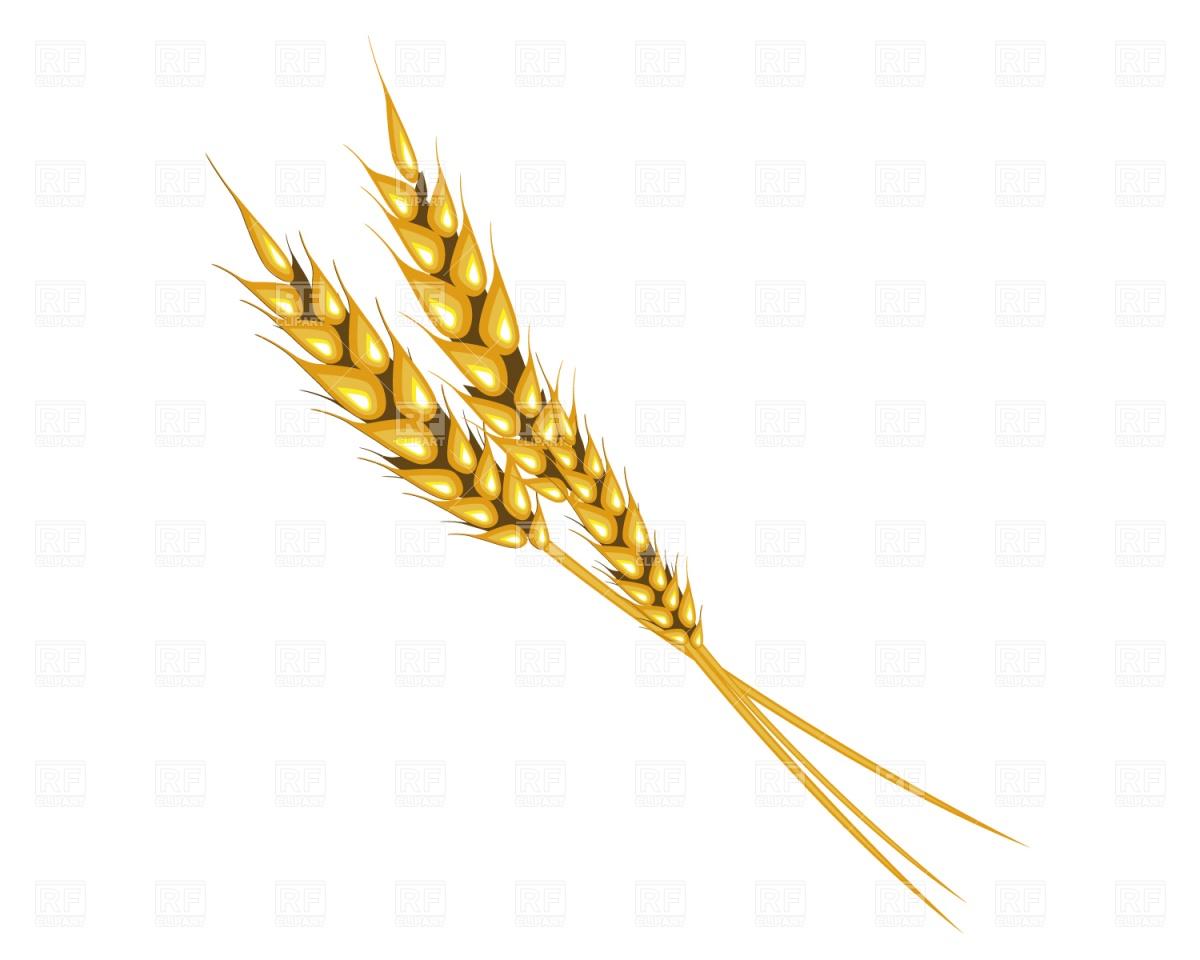 Cereals, rye Vector Image #676.