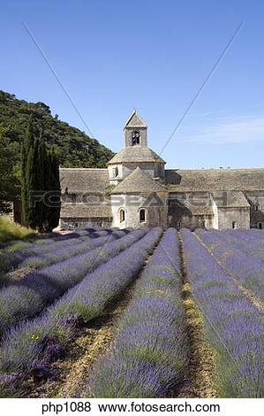 Pictures of Lavender fields at the Abbaye de Senanque at Gordes in.