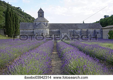"Stock Photo of ""Cistercian Senanque Abbey with lavender field."