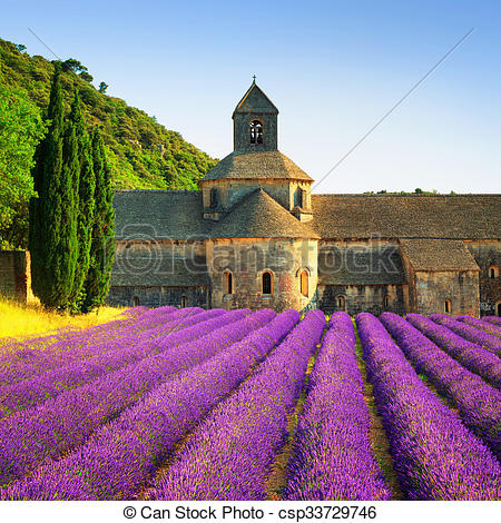 Stock Photo of Abbey of Senanque blooming lavender flowers on.
