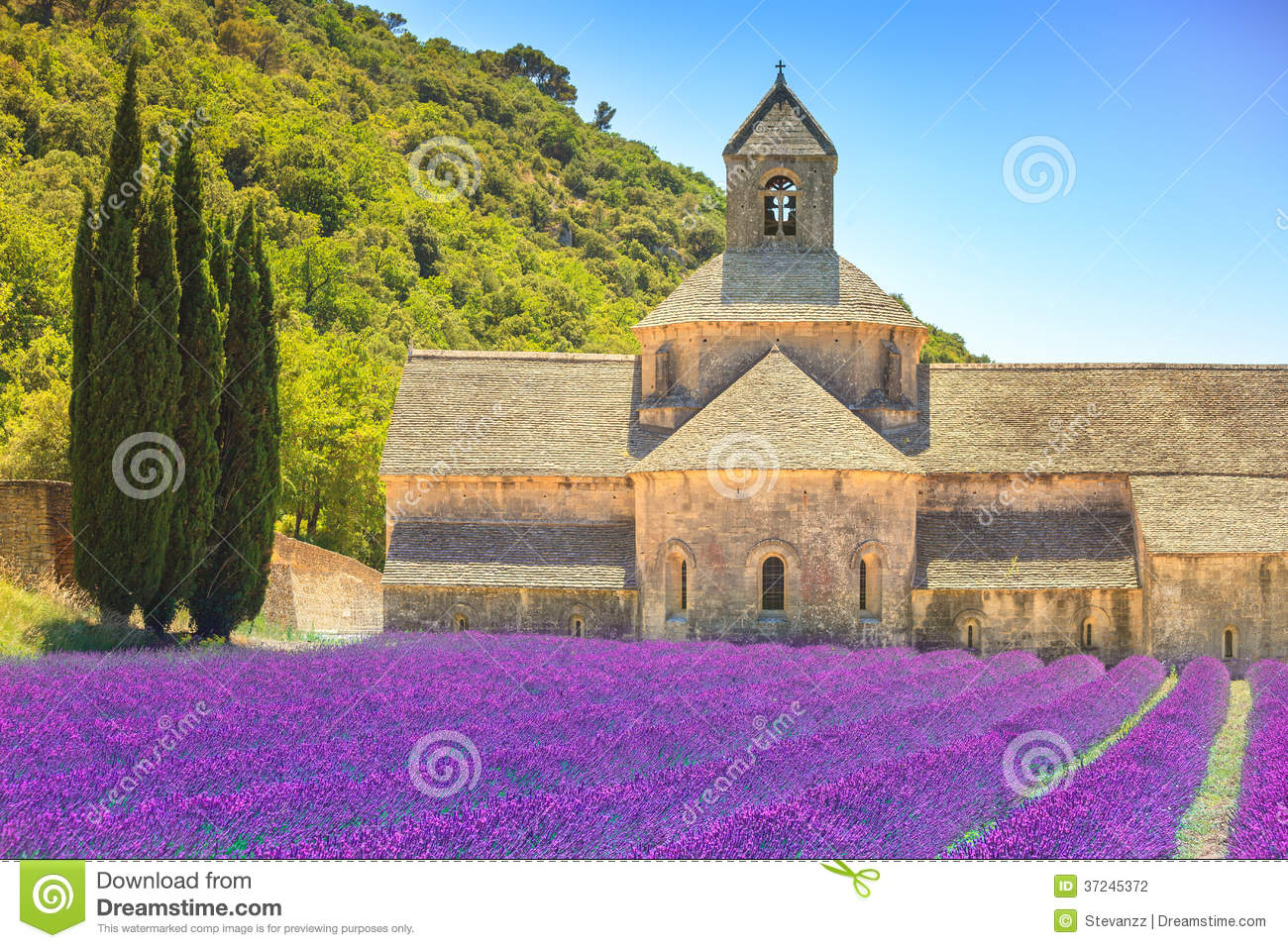 Abbey Of Senanque Blooming Lavender Flowers. Gordes, Luberon, Pr.