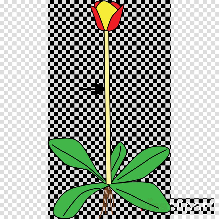 flower clip art leaf plant plant stem clipart.