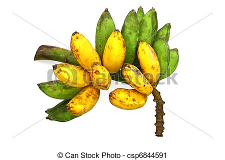 Stock Photography of Saba Banana Cluster.