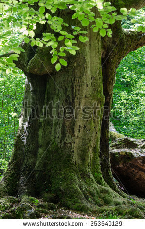 Waldsterben Stock Photos, Images, & Pictures.
