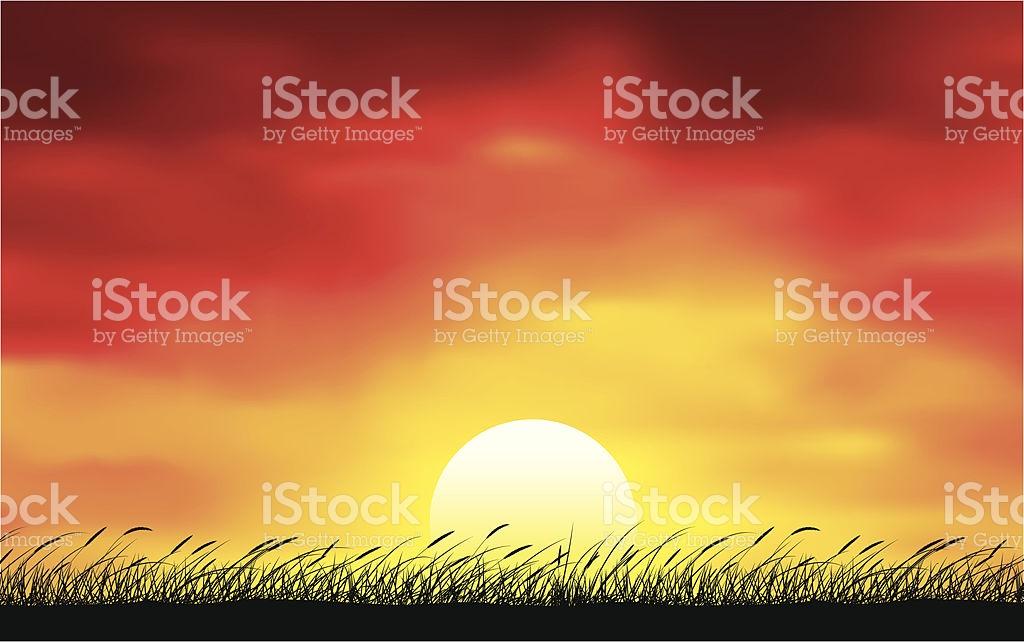 Cattails Bei Sonnenuntergang Vektor Illustration 165638011.