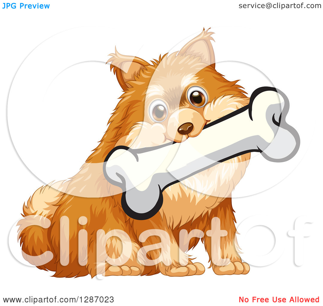 Clipart of a Sitting Sable Pomeranian Dog with a Bone in His Mouth.