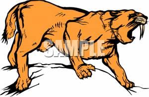 Saber Tooth Tiger.