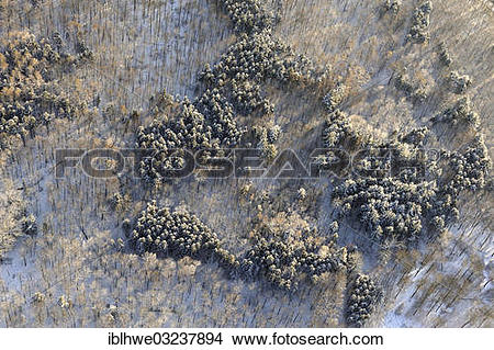 """Stock Photo of """"Aerial view, winter forest, Revier Aumuhle."""