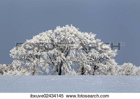 "Stock Image of ""Snow."