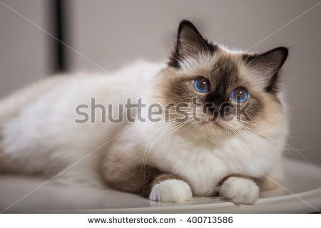 Sacred Animal Stock Photos, Royalty.