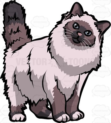 Sacred Cat of Burma Cartoon Clipart.