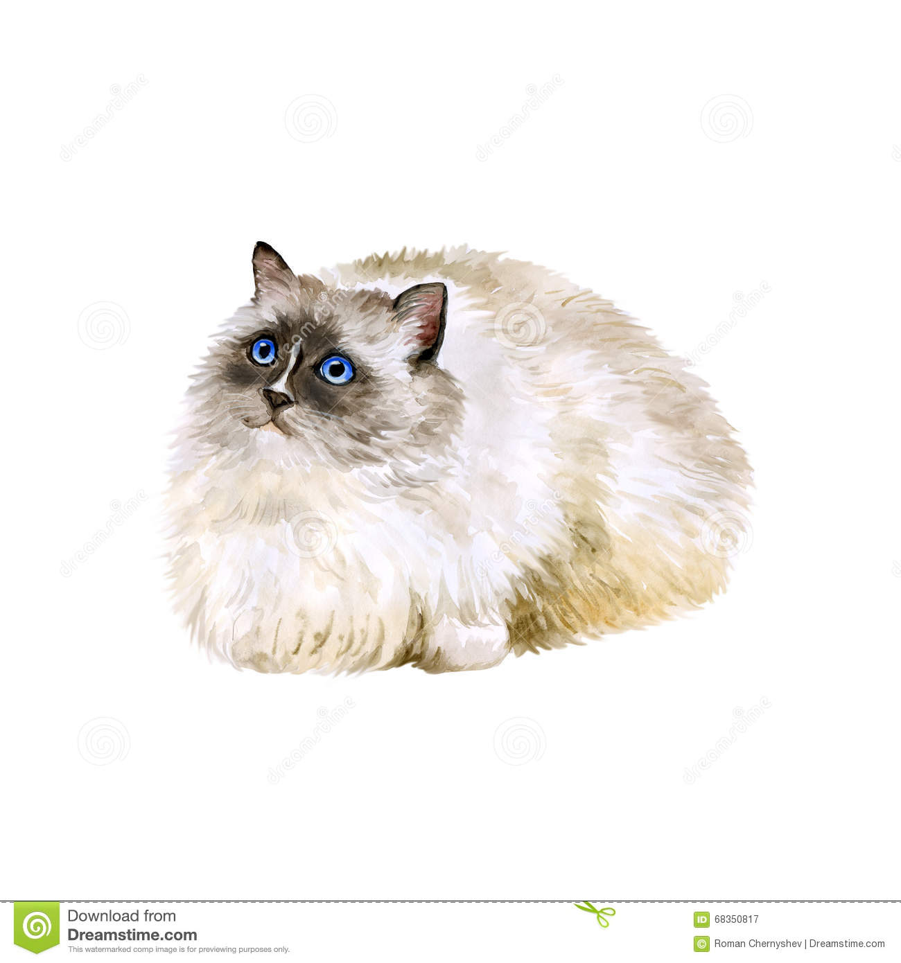 Birman Stock Illustrations.