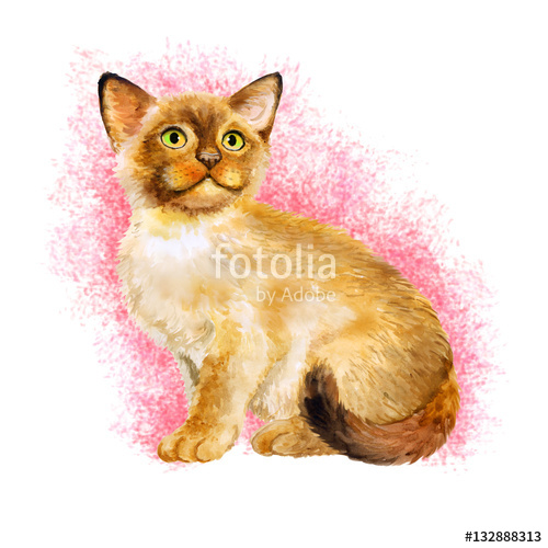Watercolor portrait of Sacred birman kitten, Sacred cat of Burma.