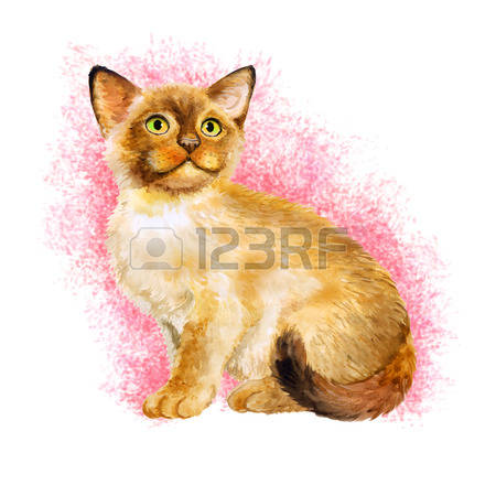 94 Birman Cliparts, Stock Vector And Royalty Free Birman Illustrations.