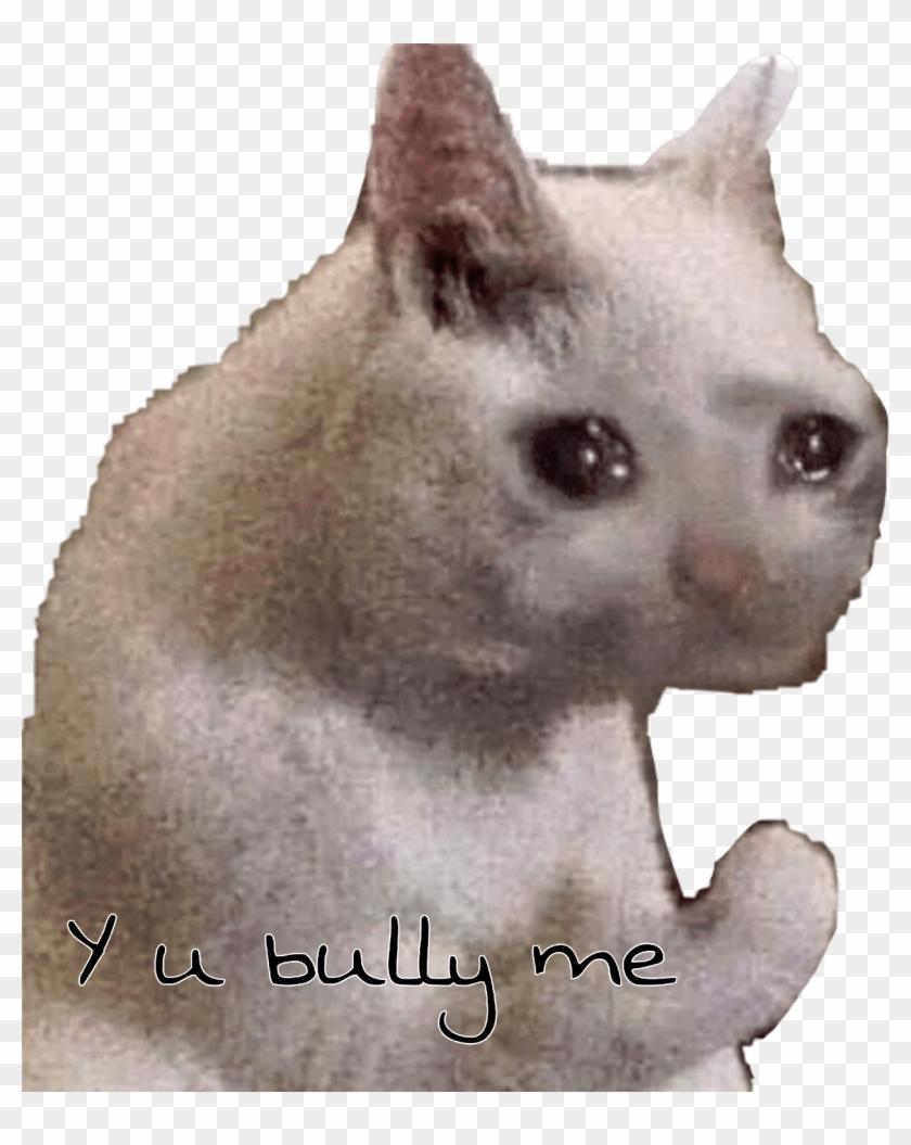 U Bully Cat Sad Meme Freetoedit.