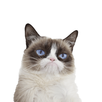 Grumpy Cat transparent PNG images.