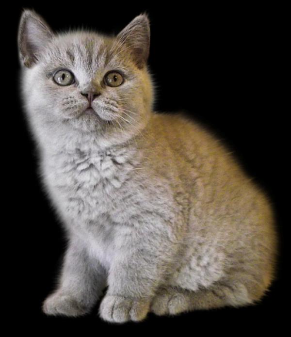 Sad Cat Png.