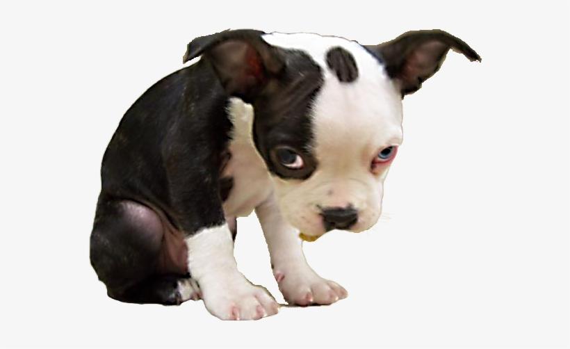 Download Free png Sad Puppy Png Sad Dog Ok Meme Transparent.