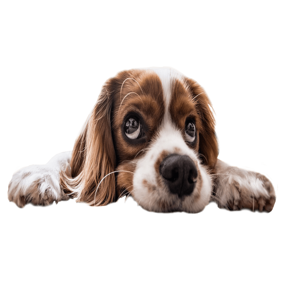 Sad Puppy Eyes Transparent Background PNG Image.