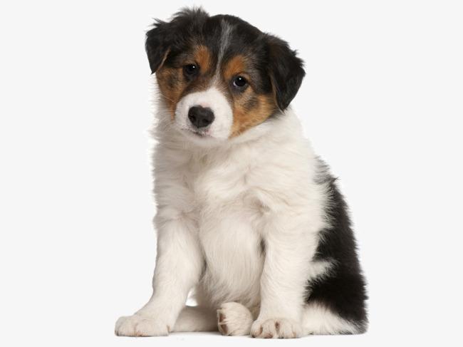 Sad Puppy Png & Free Sad Puppy.png Transparent Images #15885.