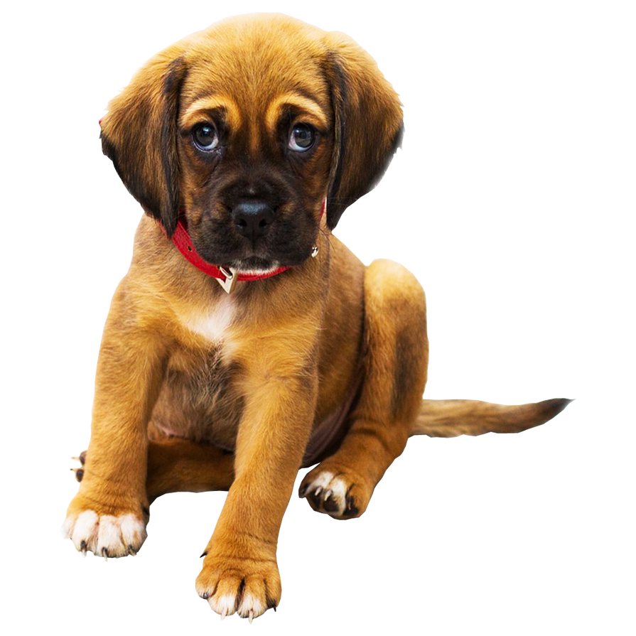 Sad Puppy PNG Background Pet Dog Image.