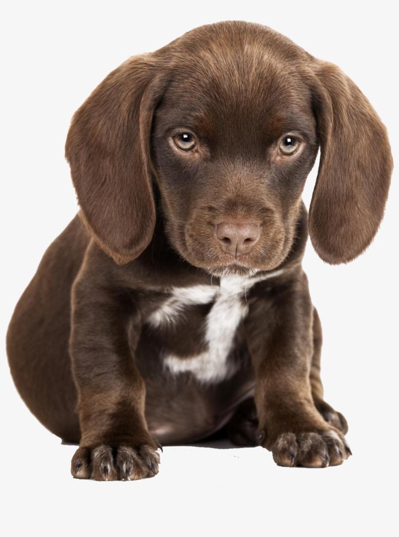 Cute Sad Puppy Png.