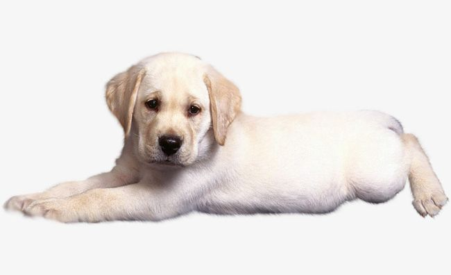 Sad Puppy PNG, Clipart, Animal, Material, Pet, Png, Png.
