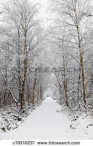 Picture of England, Lancashire, Saddleworth, Snow covered path.