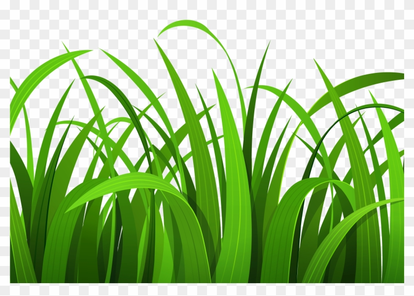 Lawn Clipart Safari.