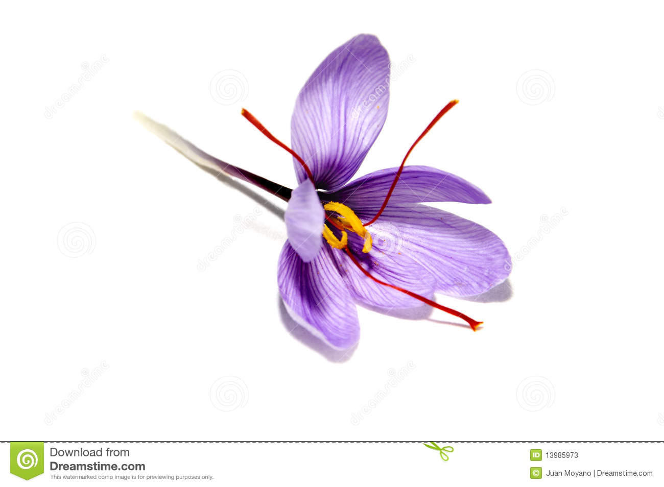 Saffron Flower Stock Photos.