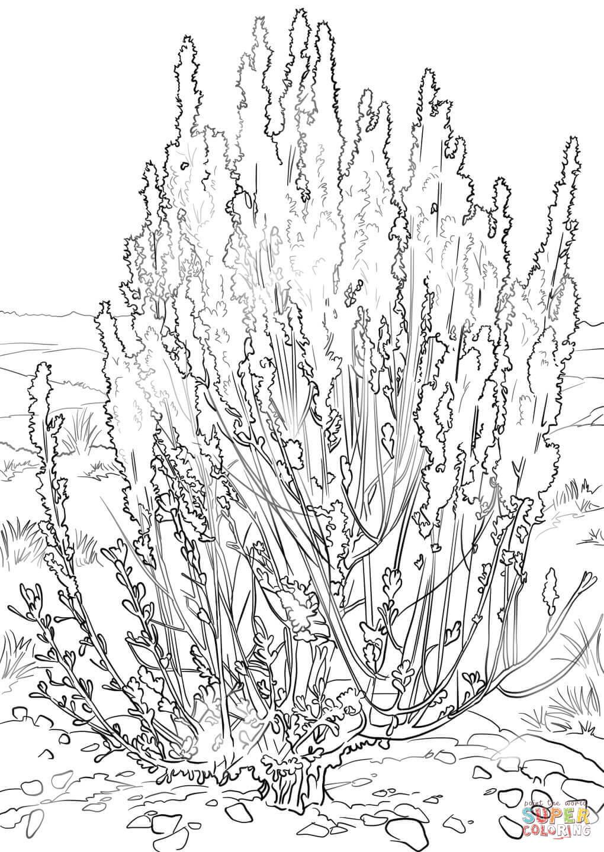 Big Sagebrush coloring page.