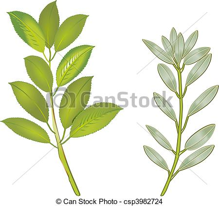 Sage Clip Art and Stock Illustrations. 778 Sage EPS illustrations.