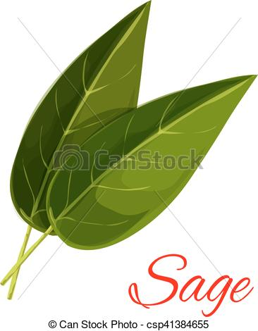 Clipart Vector of Sage herb leaves isolated icon.