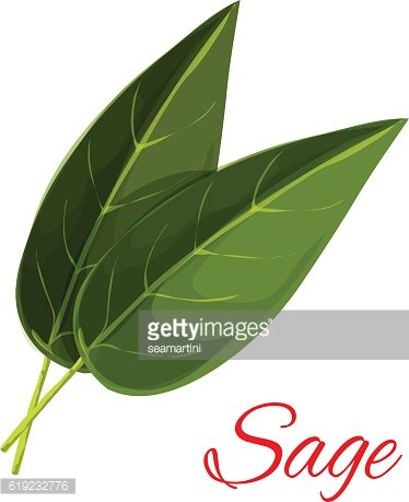 Sage herb leaves isolated icon Clipart Image.