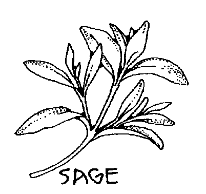 Sage Bw Clipart.